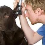 Énekes utcai állatorvosi rendelő - Rákospalota