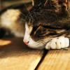 Fájdalmas vizeletürítés macskáknál